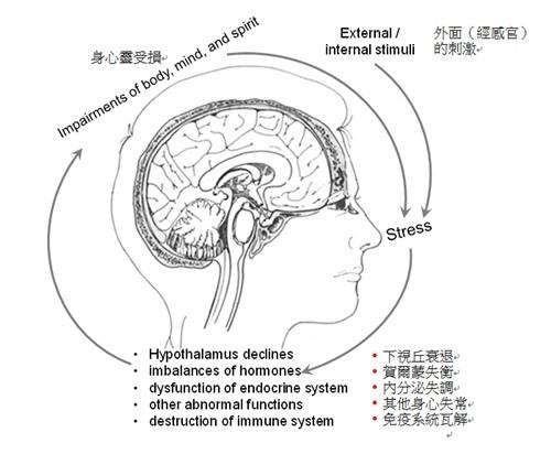 腦部的負向循環