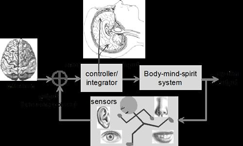一般大腦的回饋系統