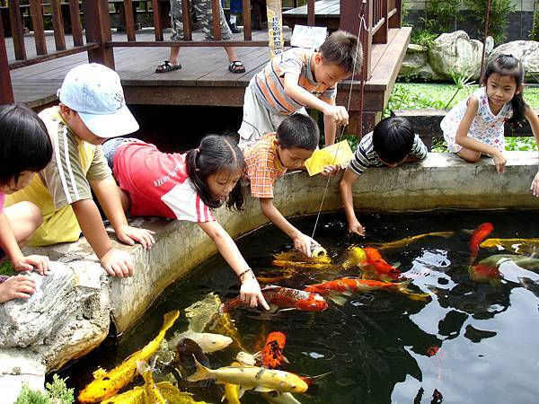 餵魚活動照1