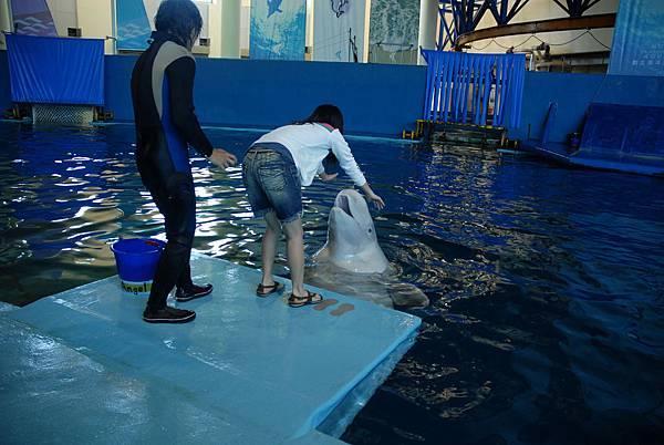 白鯨與人互動