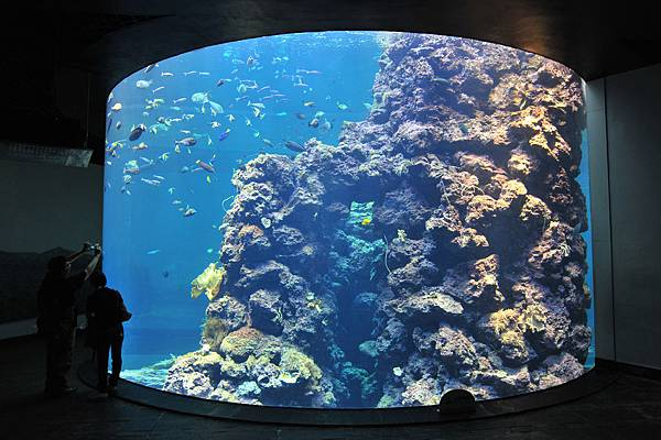 珊瑚王國館-珊瑚礁預覽