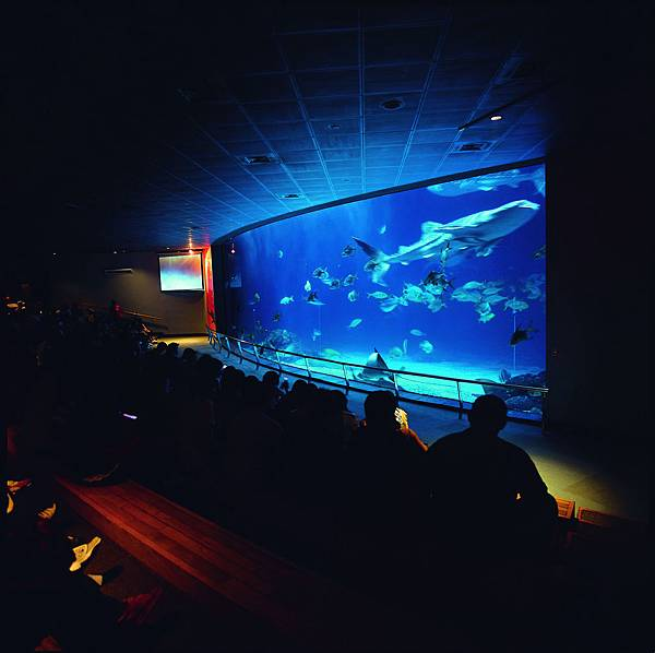 臺灣水域館-大洋池