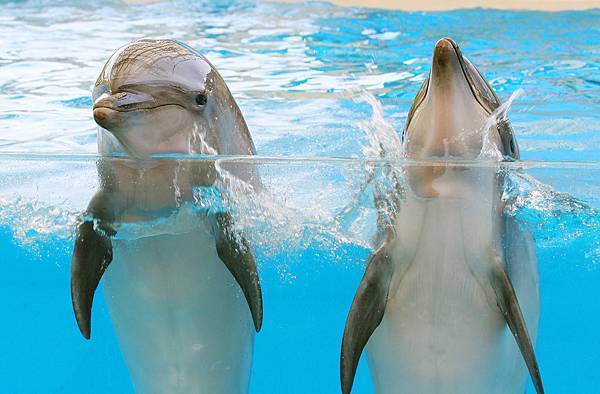 海洋哺乳生態教室,可了解海豚的棲息環境、回聲定位、海豚行為等,進而知道海洋生態的保育和重要性