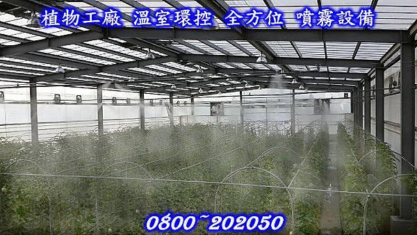 溫室植栽噴霧降溫