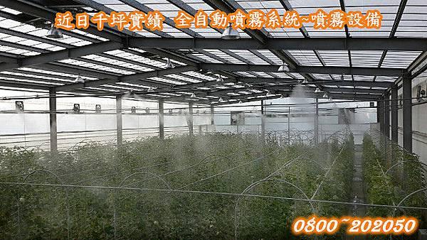 網室降溫、網室加濕、溫室降溫、溫室加濕、噴霧系統設備、全省服務專線:0800~202050