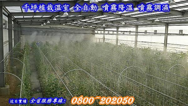 網室降溫、網室加濕、溫室降溫、溫室加濕