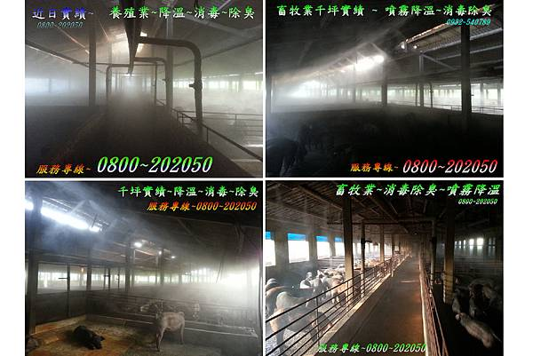 養雞場噴霧消毒