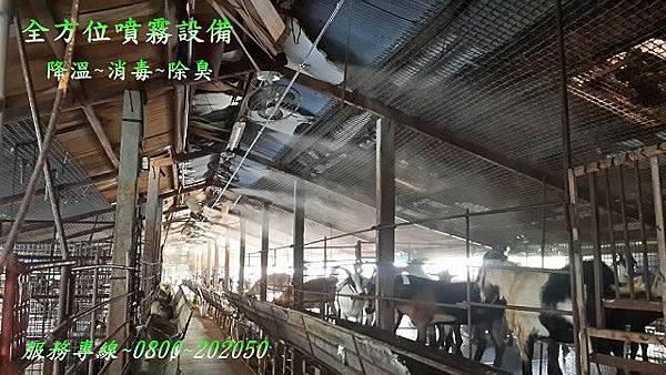 畜牧場降溫、畜牧場消毒、禽流感消毒、預防禽流感
