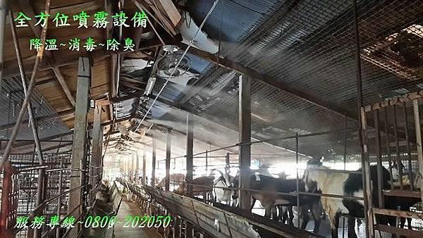 畜牧場噴霧降溫、噴霧消毒、噴霧除臭