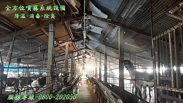 畜牧養羊場降溫