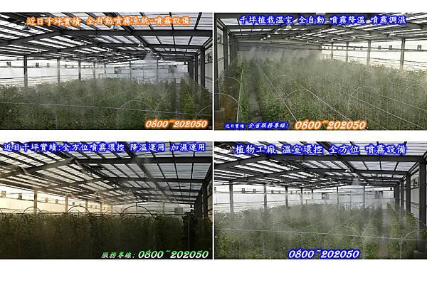 溫室灑水降溫設備