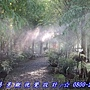 森林廊道水霧降溫