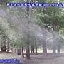 園藝樹牆噴霧造景
