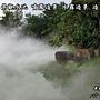 水池噴霧造景