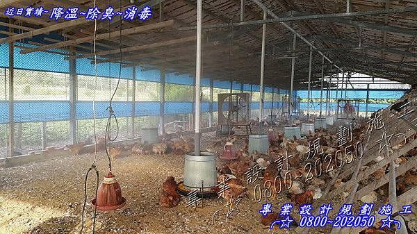 雞場降溫、養雞場降溫、養雞場噴霧降溫