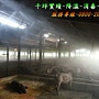 養豬場除臭降溫