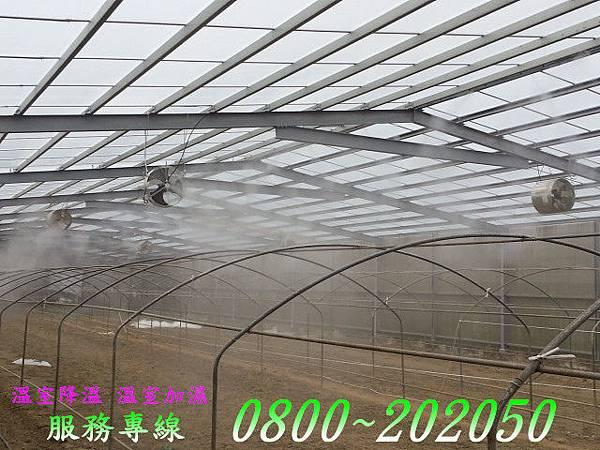 植物工廠植栽降溫