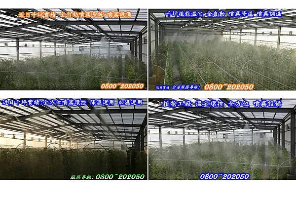 植物工廠噴霧降溫