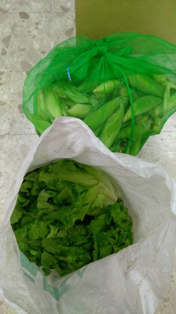 2.23南投善心人士捐贈蔬菜玉米各一袋.jpg