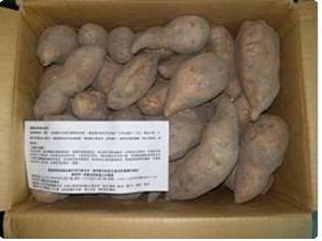 5.21天河捐贈有機蕃薯一箱.jpg