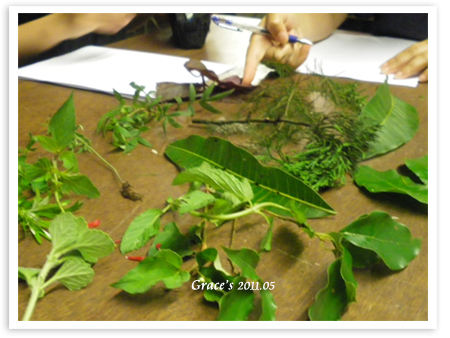 植物辨識.jpg