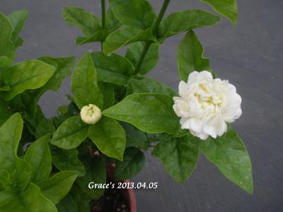 虎頭_10204052