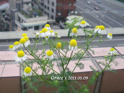 德甘_0509-2