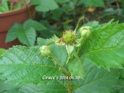 黑莓_1030620-2