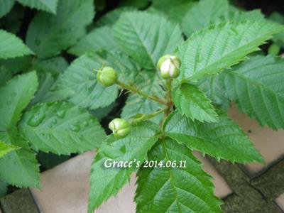 黑莓_1030611