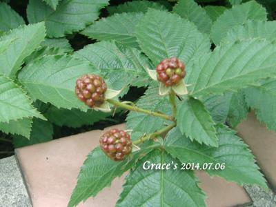 黑莓_1030706