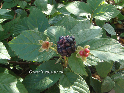黑莓_1030728