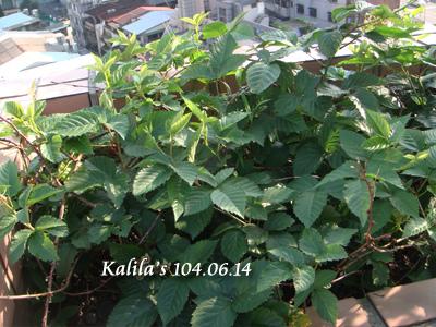 1040614黑莓