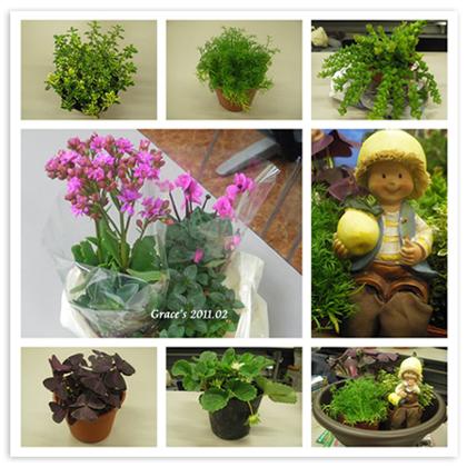 園藝治療_植物s.jpg