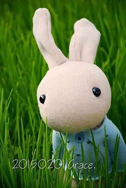 襪子娃娃181號清新暖男兔 (5)