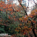 PhotoCap_IMG_4791