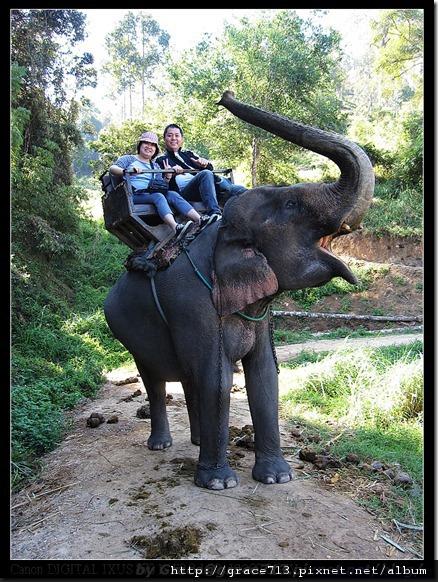 大象學校 (37)