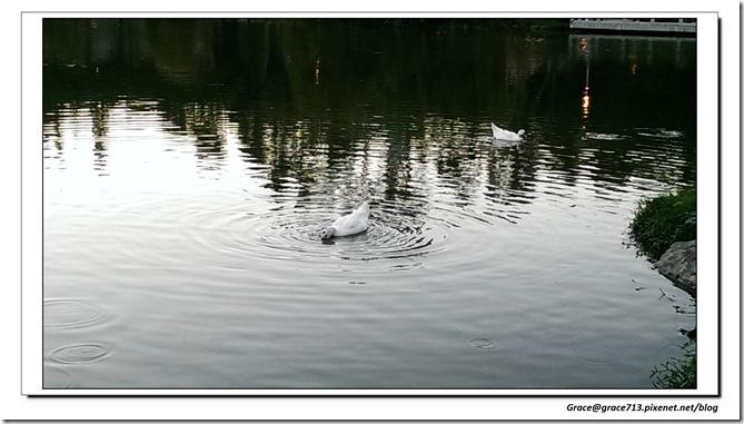 IMAG6661