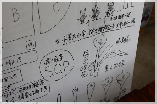 2013單寧女孩在竹子湖芋見愛‧情 (254).JPG