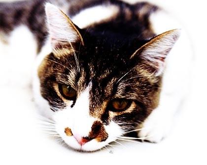 cat4-1small.jpg