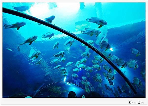 海生館魚群7546