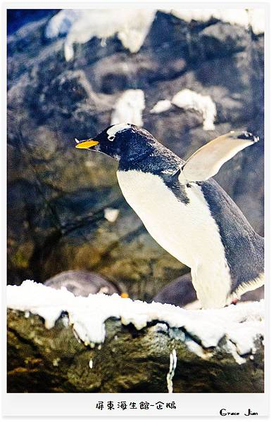 企鵝7641