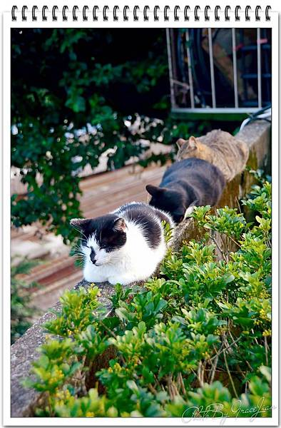 貓接龍2585