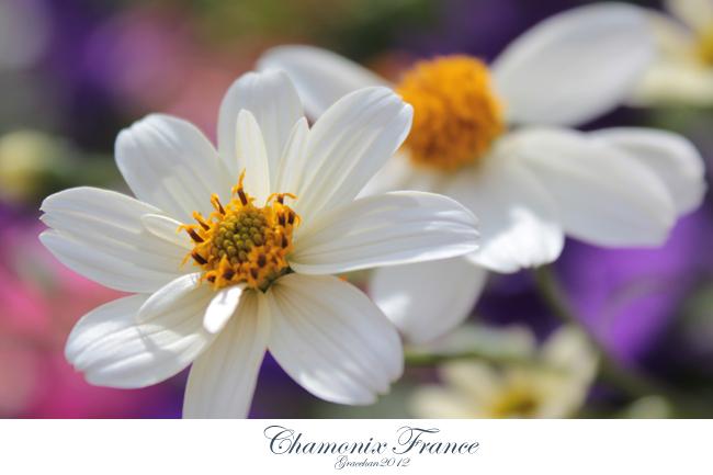 Chamonix032