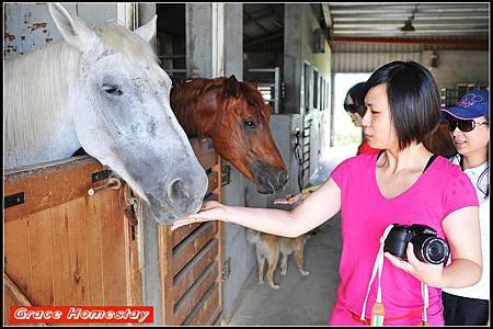 宜蘭旅遊~騎馬趣~宜蘭大洲馬場~我是羅東民宿葛瑞絲~