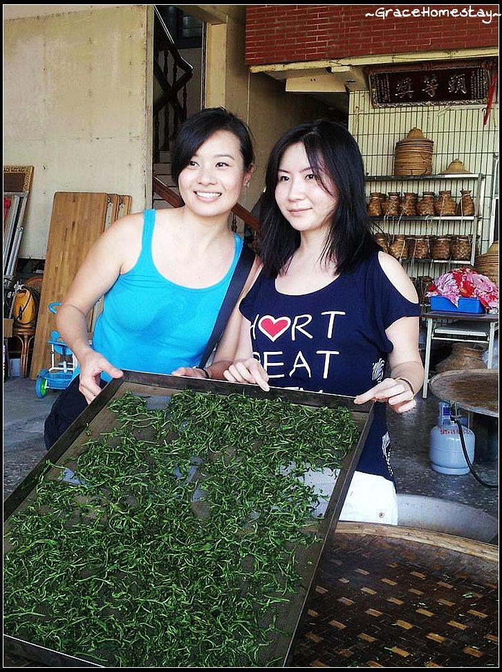 冬山的馨山茶園採茶烘茶體驗~宜蘭民宿小管家~葛瑞絲