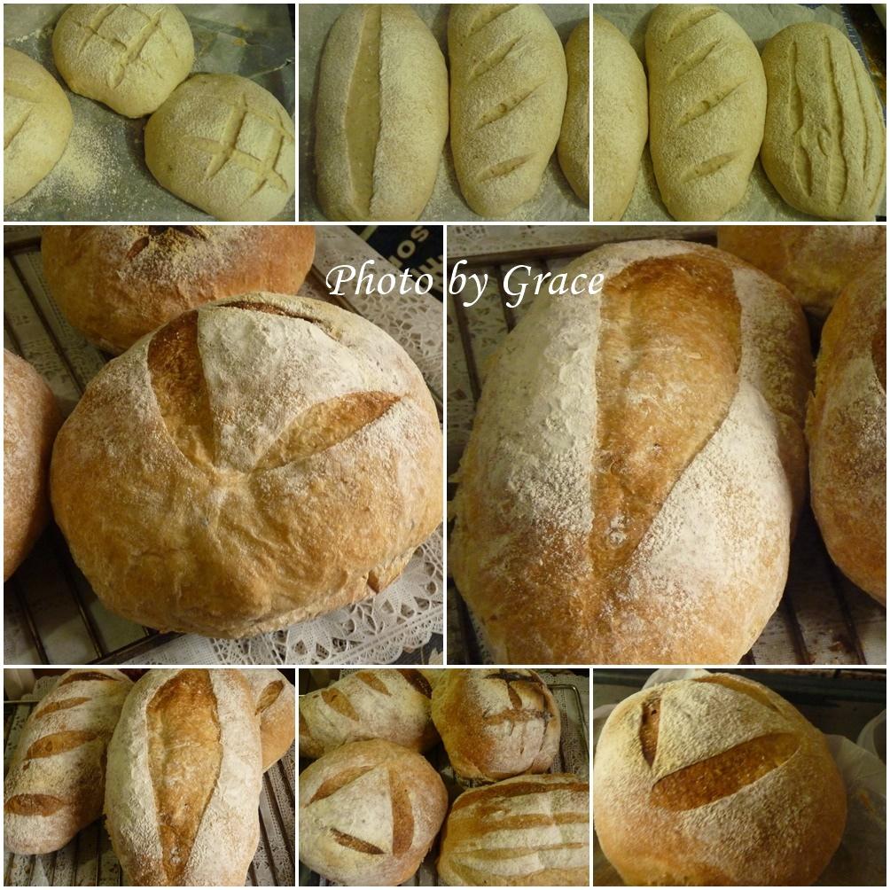 洋蔥麵包圖集.jpg