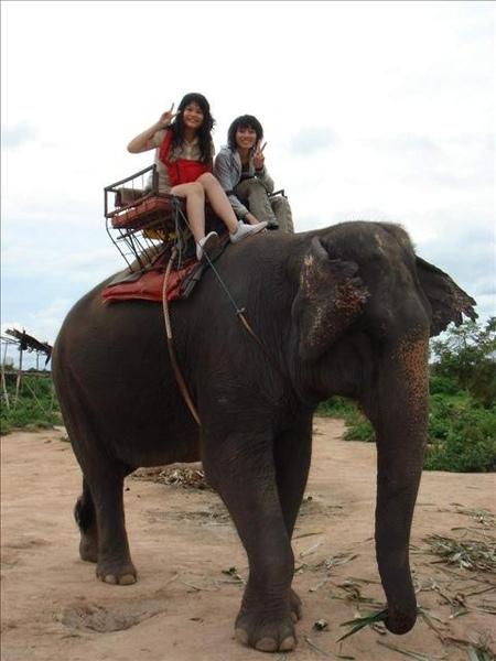 大象超可愛的拉~