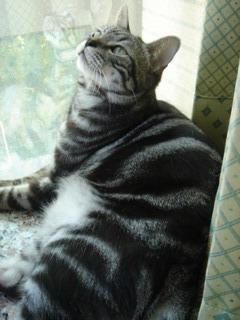 愛窗的貓 III