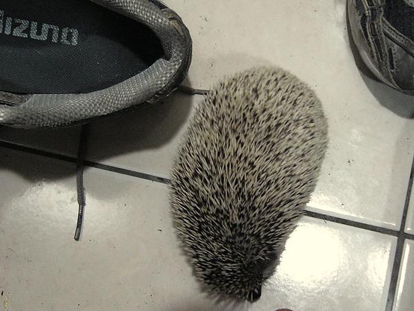 被趕出鞋子的芝麻