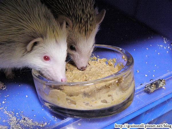 母女吃EVO罐頭